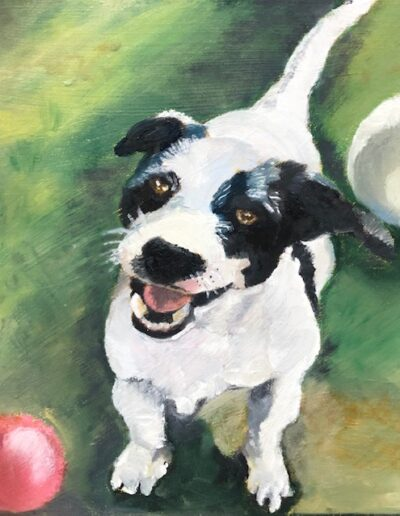 Portrait of Chester Dog